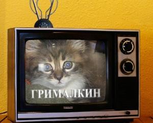 grimalkin-pravi-izyavlenie-po-tv