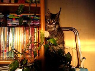 grimalkin-redi-bibliotekata