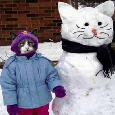 snowcat-kotka-pravi-snejen-chovek