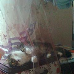 Грималкин прави сиеста преди фиеста - разхубавяващ сън преди купон!
