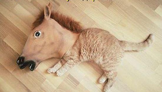 godina-konya-kotka